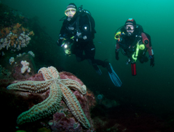BSAC, British Sub Aqua Club, The Angling Trust, University of Aberdeen, British diving, UK diving, diving survey, Rosemary E Lunn, Roz Lunn, The Underwater Marketing Company, Marine Conservation Society, MCS, Marine Protected Areas, Marine Protected Zones,