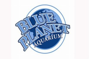 Blue Planet Aquarium, Dive Officer job, scuba diving jobs, Rosemary E Lunn, Roz Lunn, The Underwater Marketing Company, TUMC, scuba diving PR