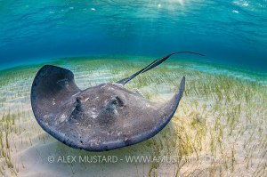 Alex Mustard, Digital Madness, underwater photography, photo workshop, Ocean Frontiers, Grand Cayman, Rosemary E Lunn, Roz Lunn, The Undewater Marketing Company, scuba news, diving PR
