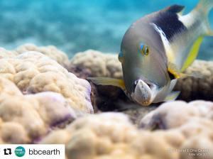 Yolly Bosigner, OWUSS Rolex Australasian scholar, BBC Natural History Unit, David Attenborough, plastic oceans, Blue Planet II, Blue Planet 2, Rosemary E Lunn, Roz Lunn, tuskfish, The Underwater Marketing Company, scuba diving news, Impact Award,