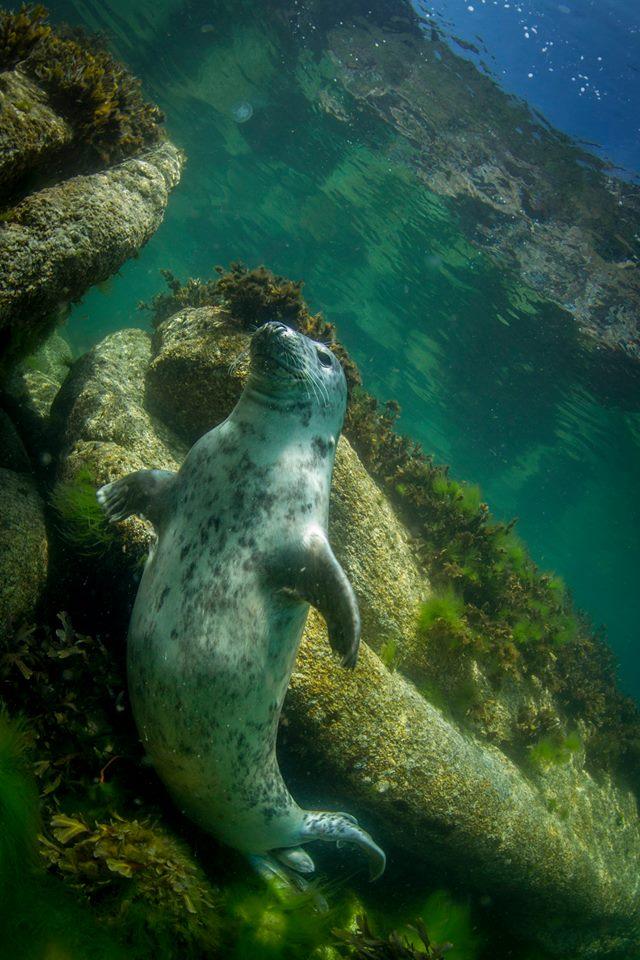 Suunto, UK scuba diving, Wraysbury Dive Centre, Roz Lunn, Rosemary Lunn, The Underwater Marketing Company,
