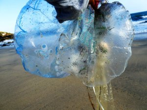 Portheras Cove Friends, horse, ballon debris, balloon litter, Cornwall, plastic ocean, one ocean, Mylar balloon, foil balloon, Rosemary E Lunn, Roz Lunn, The Underwater Marketing Company, balloon release
